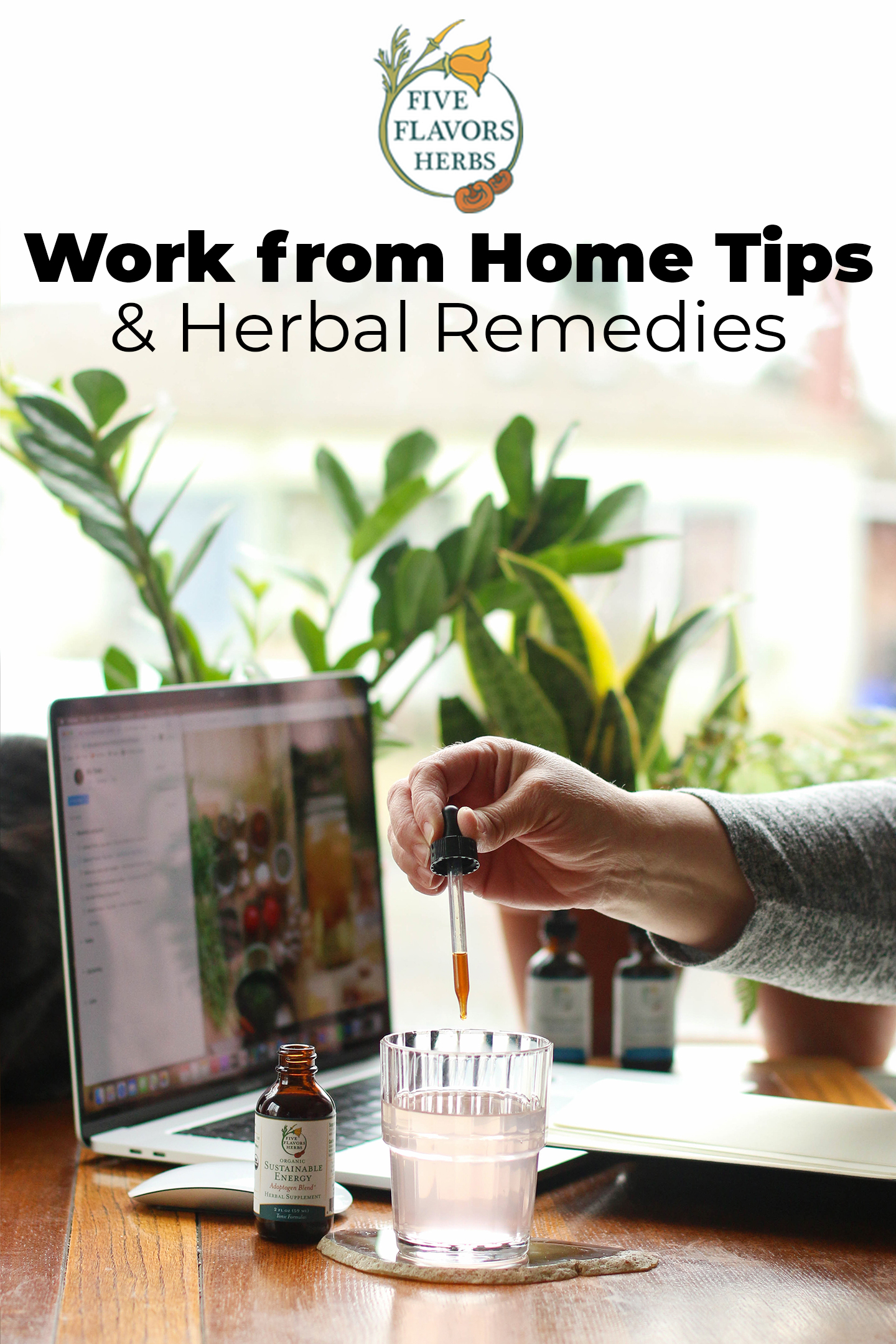 work-from-home-tips-home-office-setup-with-plants-and-sunlight-on-desk